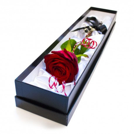 Single red rose in box